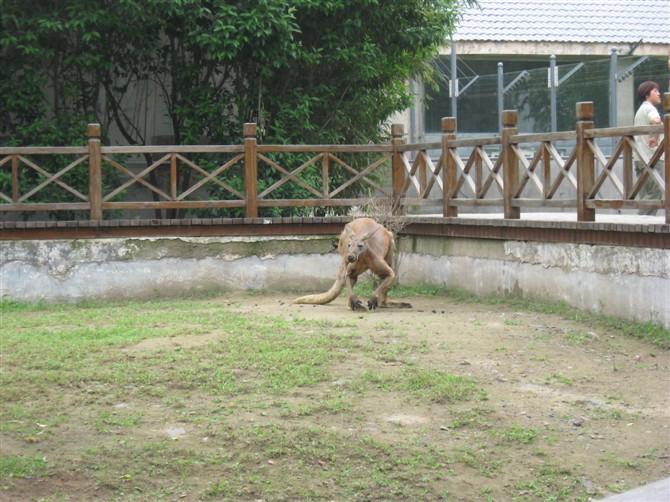 济南游第三站 动物园